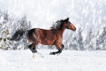 Horse in a snow on winter background