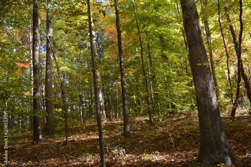 A Walk Through Woods