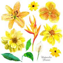 Exotic Flowers Watercolor Illu...
