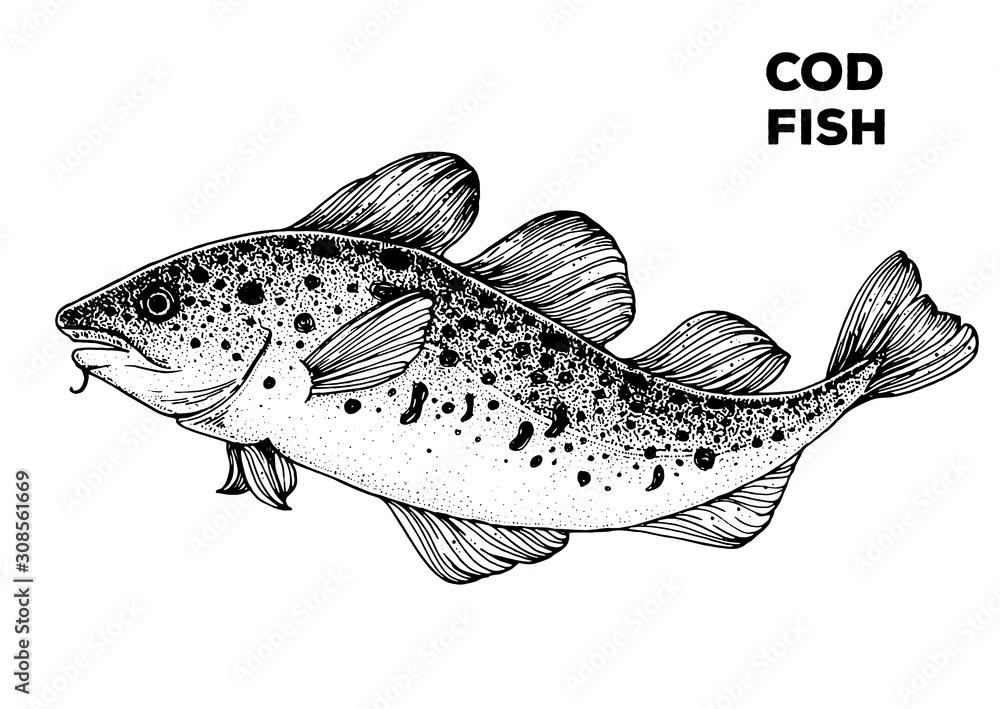 Fototapeta Cod fish sketch. Hand drawn vector illustration. Seafood design element for packaging. Engraved style illustration. Can used for packaging design. Cod fish label