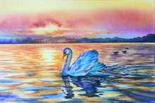 Watercolor White Swan On Blue ...