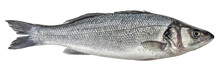 Fish Sea Bass Isolated. Side V...