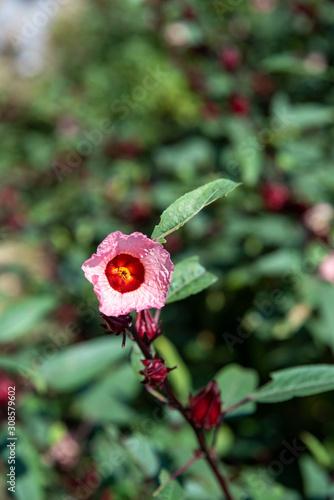 Obraz Wspaniały egzotyczny kwiat - fototapety do salonu