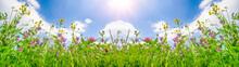 Spring Background Banner Long ...