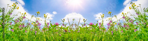 Spring background banner long - Panorama of blooming flowers on spring / summer meadow with sunshine and blue cloudy sky - 308593083