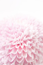 Feminine Floral Background Of ...