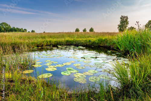 Natural pond in nature reserve near Bodegraven in the Netherlands Fototapeta