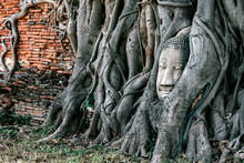 Horizontal Shot Of Buddha Statue Entwined By Roots Of Spiritual Tree. Asia, Tourism, Adventures Concept.