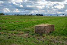 Large Hay Square Bail In A Green Field .