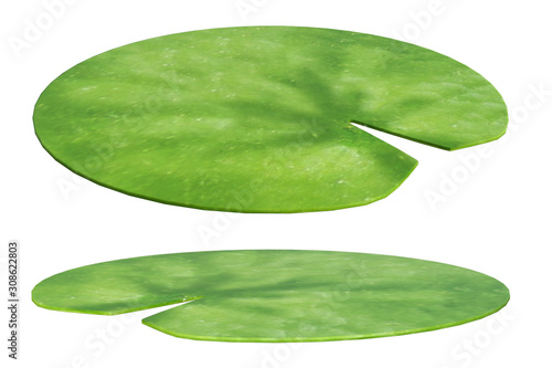 Valokuvatapetti Set of lily pads isolated on white, 3d render.