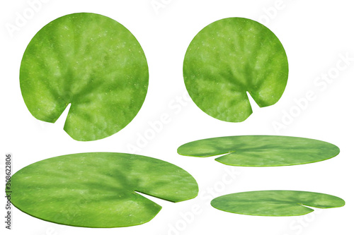 Valokuva Set of lily pads isolated on white, 3d render.