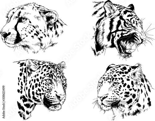 set of vector drawings of various animals, predators and herbivores, hand-drawn Canvas Print