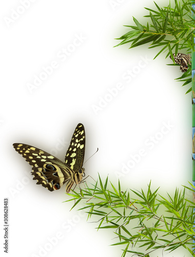 Papel de parede  butterfly on green background