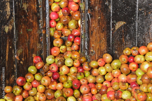 Carta da parati Harvested cider apples inside distillery in Somerset, United Kingdom
