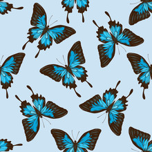 Seamless Pattern With Hand Drawn Colored Papilio Ulysses