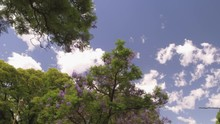 Camera POV Flying Drone Driving Low Angle Over Street Trees And Buildings. Sun Reflections � Flare. Jacaranda Tree, Violet Flowers
