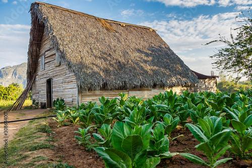 The Vinales valley in Cuba is a major tobacco growing area Wallpaper Mural