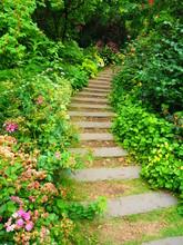 庭の花と小道