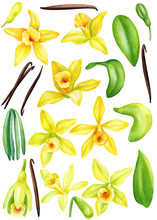 Set Of Yellow Vanilla Flowers ...