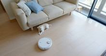 Pomeranian Dog Sit On Floor At Home With Robotic Vacuum Cleaner Slides Across The Room