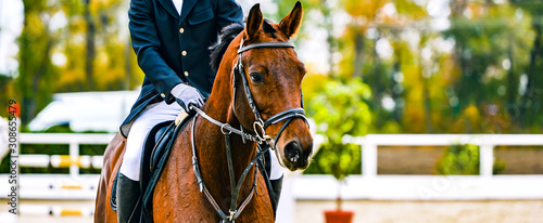 Fototapeta Rider on sorrel horse in jumping show, equestrian sports. Brown horse and man in uniform going to jump. Horizontal web header or banner design. obraz