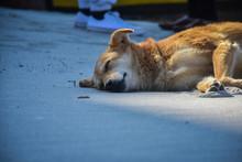 A Street Dog Sleeping On The B...