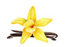 Vanilla Flowers On An Isolated...