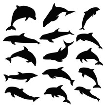 Vector, Isolated, Dolphin Silh...
