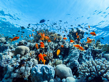 Colorful Corals And Exotic Fis...