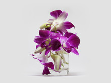 Front View Violet And Pink Orchid Flowers On Water In Small Glass Cup On White Background,copy Space