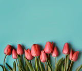 Fototapeta Tulips - Red tulip flower on pastel blue background from above. Spring bud bouquet creative frame design. Valentine, Mother's day and wedding greeting card.
