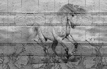3d Background Texture, Horse R...