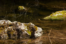 Mossy Rocks In A Forest Pond. ...