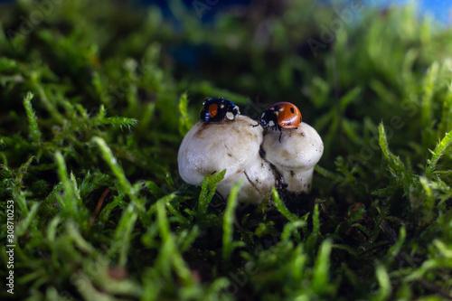 Photo closeup of two ladybugs getting acquainted