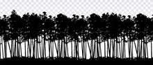 Realistic Illustration Of Landscape With Coniferous Forest Of Pines And Trees, Isolated Under Transparent Sky, Vector