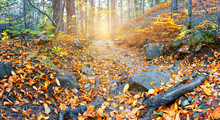 Rocky Path To Sun In Autumn Fo...