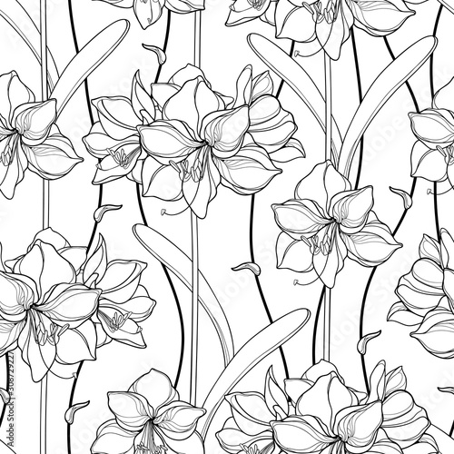 Seamless pattern with outline Amaryllis or belladonna Lily flower and leaf in black on the white background Canvas Print