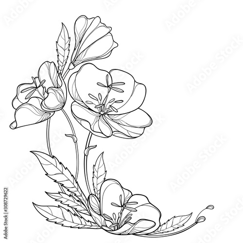 Photo Corner bouquet of outline Oenothera or evening primrose flower bunch with bud and leaf in black isolated on white background