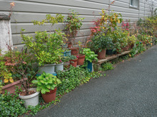 Many Plant For Gardening Along...