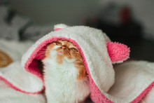 Funny Ginger Kitten In A White Soft Hood Of A Bathrobe With Pink Ears.