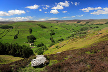 Summer View Through Nidderdale...