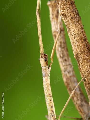 Moth фототапет