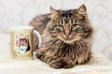 A Brown Fluffy Cat Sits Near A...