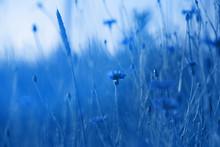 Cornflowers In Wheat Field On ...