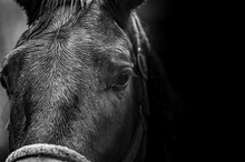 Close-up Portrait Of A Horse I...