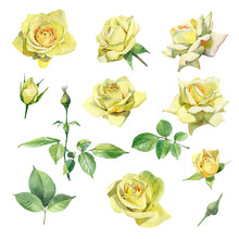 Set Of Watercolor Yellow Roses...