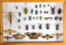 Collecting Insects With Pins. Amateur Or School Homemade Insect Collection. Collection Of Insects Entomologist