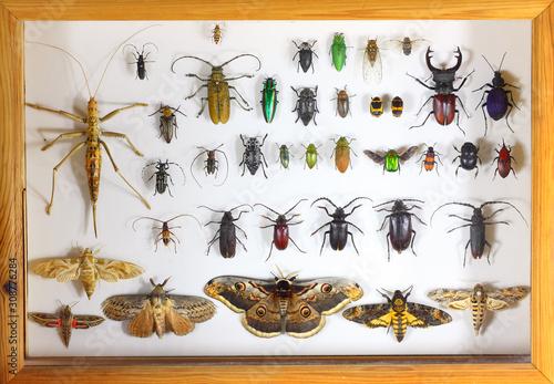 Collecting insects with pins Tapéta, Fotótapéta