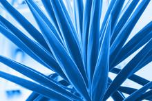 Palm Succulent Plant Detail Cl...
