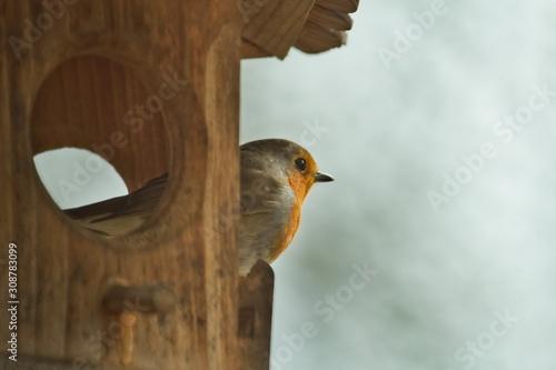 Fotografía Ein Rotkehlchen schaut im Winter aus einem Vogelhaus Futterhaus, Erithacus rubec